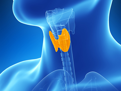 What is the purpose of the endocrine system in the body?